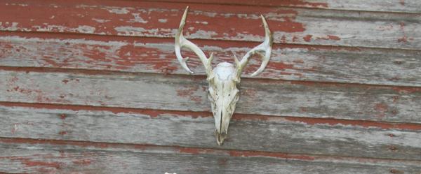 Deer Head_1