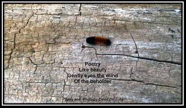 Poetry Cat