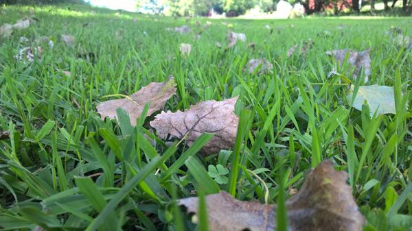 August Leaves
