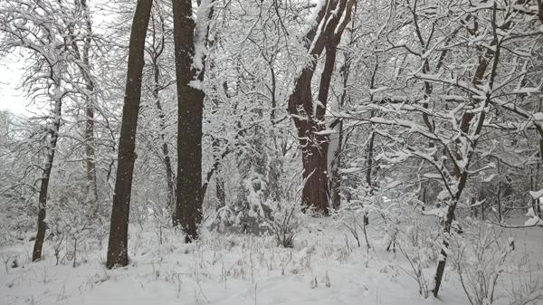 Grove_Snow_2015