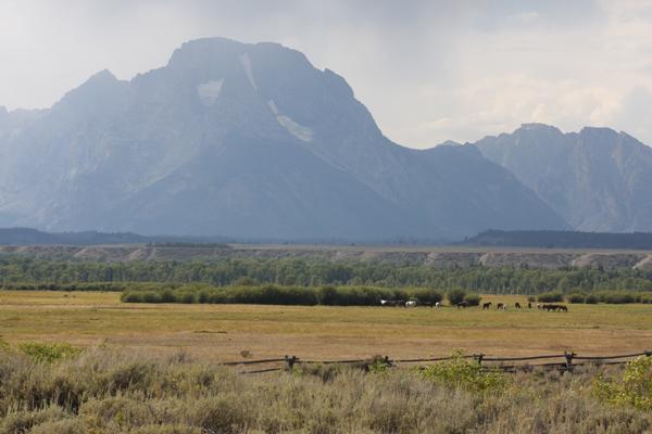 Teton Horser Herd