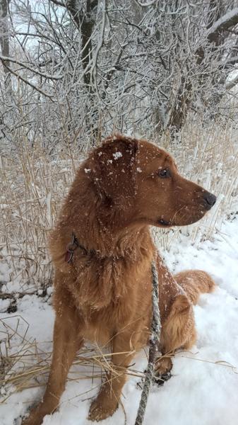 kopper-snow