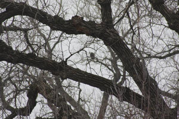 eagle-tree