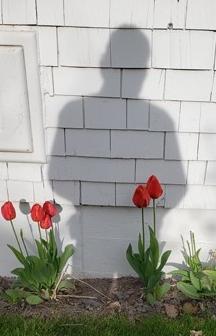 Shadowed Tulip
